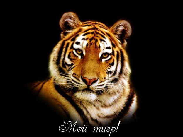Рисунок белый тигр