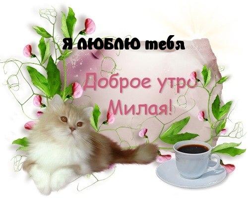 люблю тебя доброе утро картинки