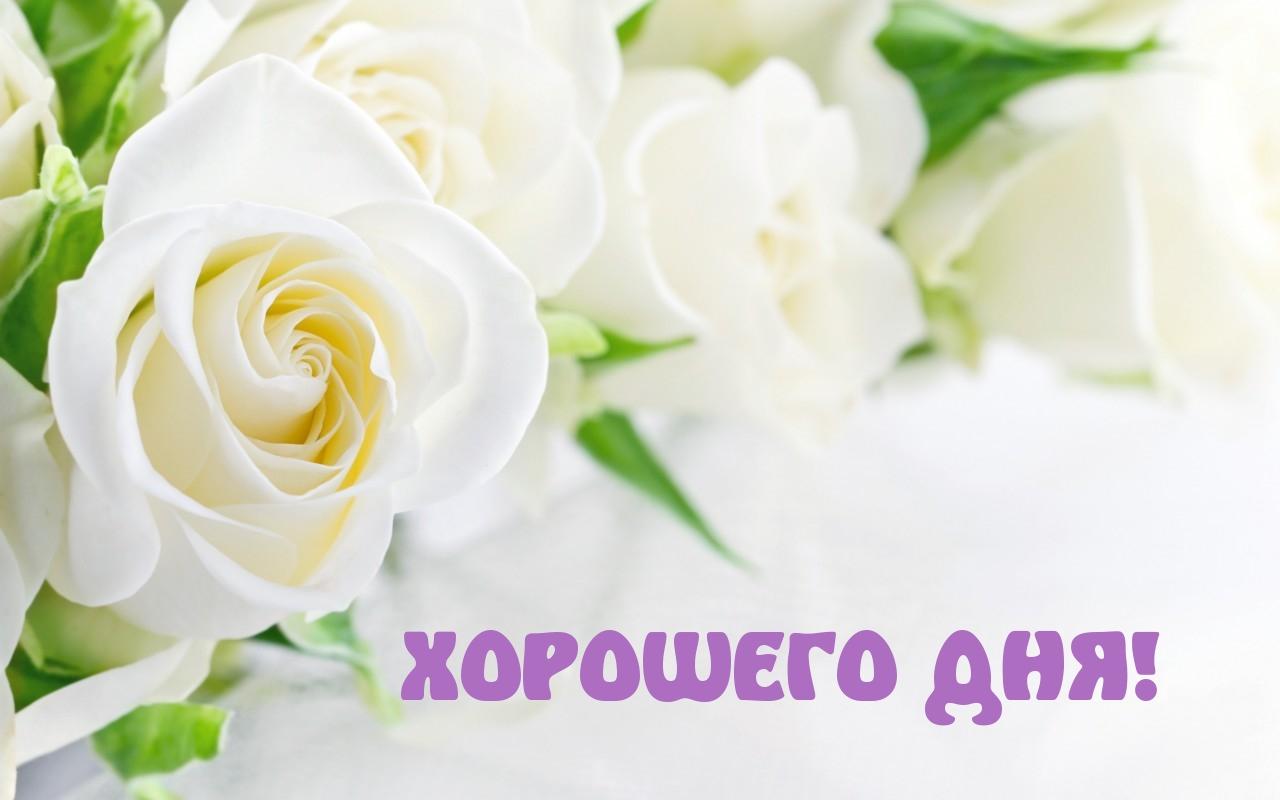 http://imagetext.ru/pics_max/images_9746.jpg